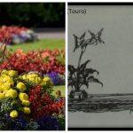 Graus 11 a 20 de Jardim - ou Touro