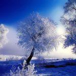 O Signo da Neve - ou Aquário