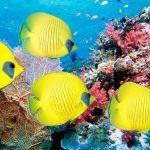 O Signo do Mar - ou Peixes